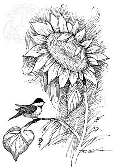 Chickadee & Sunflower - Sites new Sunflower Coloring Pages, Sunflower Drawing, Fall Coloring Pages, Sunflower Art, Adult Coloring Pages, Coloring Books, Pencil Art Drawings, Easy Drawings, Drawing Sketches