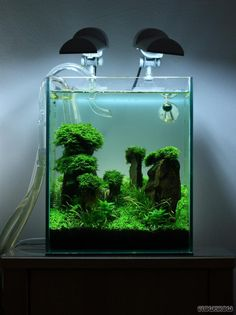 nano aquascaping - Google-Suche