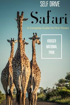 Practical Guide to Kruger Self Drive Safari for First Timers A complete guide to Kruger Self Drive Safari Kruger National Park Safari, National Parks, Travel Pictures, Travel Photos, Travel Articles, New Travel, Travel Plan, Group Travel, Travel Guide