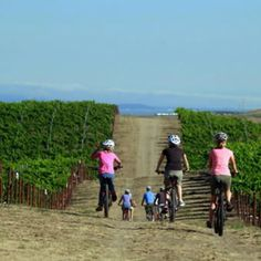 Guided Bike Tour at Roche Estate Winery Ranch with Wine Country Cyclery