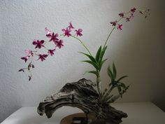 mounting orchids on driftwood | welcome to:: August 2010