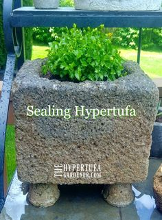 Don't hesitate to plant anything you want in your hypertufa. If it is a moisture loving plant, just give your pot a quick and easy seal and you're good to go! #hypertufa #sealinghypertufa #succulents #flowerplanters
