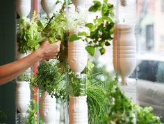 Hydroponic Window Farm for indoor vegetable gardening plus 11 other clever indoor edible gardening hacks.