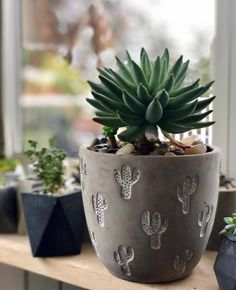 Shop online for all your Cactus and Succulent must haves. Our selection of decorative planters will help you add plenty of personality to your space.Love and Laughter Makes The World A Better Place H… Deco Cactus, Cactus Pot, Cactus Decor, Plant Decor, Cactus Planters, Concrete Planters, Ceramic Planters, Planter Pots, Cement Pots