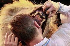 Mesele; aslanın midesindeki ekmek değil çocuk, mesele; aslan olmak.  -Fatma Küpoğlu-