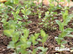 Our pride and joy – Ricola herbs. #Herbs #Ricola