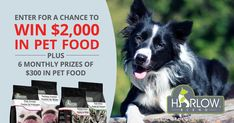 Enter to win $2,000 in pet food or 6 monthly prizes of $300 in pet food from Harlow Blend Food Plus, Contest Rules, Enter To Win, Pet Food, Free Samples, Giveaways, Backyard, Pets, Beautiful