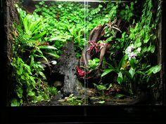 Reptile Habitat, Reptile House, Reptile Room, Gecko Terrarium, Container Water Gardens, Shrimp Tank, Growing Gardens, Moss Garden, Tree Frogs