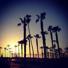 Venice beach is the place to go, if you want to take a trip to an amazing beach that has shops and much more.
