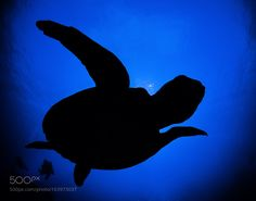 Untitled by TomMeyer #nature #photooftheday #amazing #picoftheday #sea #underwater