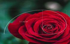 Golden Ratio In Nature, Golden Ratio In Design, Golden Ration, Fibonacci Golden Ratio, Divine Proportion, Or Noir, Rule Of Thirds, Inside Design, Patterns In Nature