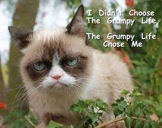 Grumpy Cat MeMe's By Gary Graefen