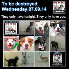 We are their lifeline, we are their hope. Tonight we help  determine if these darlings will get the future they so rightly deserve. Please share EVERYWHERE. ~~To rescue a Death Row Dog, Please read this: http://urgentpetsondeathrow.org/must-read/  To view the full album, please click here:    https://www.facebook.com/media/set/?set=a.611290788883804.1073741851.152876678058553type=3