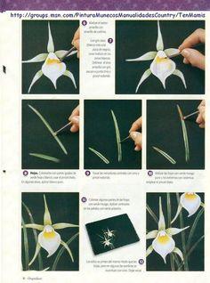Orquideas - Aurelia Souza - Álbumes web de Picasa