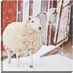 Country Kitchen 16x24 Gallery Wrapped Stretched Canvas Sheep on Plaid