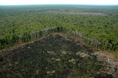 deforestation reaches highest level in a decade. Deforestation Facts, Amazon Rainforest Deforestation, Brazil Amazon Rainforest, Global Warming Poster, United Nations Environment Programme, Rainforest Theme, Habitat Destruction, Save Our Oceans, Palmas
