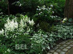 Steep Gardens, Hosta Gardens, Back Gardens, Outdoor Gardens, Moon Garden, Dream Garden, Beautiful Home Gardens, White Plants, Woodland Garden