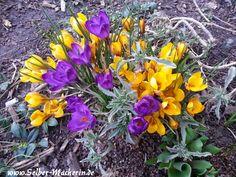 Selber-Macherin: Gartentagebuch 08.03.2015: Hallo ihr!  Hier wieder ein kleines Update aus meinem Garten!  #Garten #pflanzen #selbermachen #Selbstversorgung #Frühling #Sonne