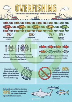 Infographic Poster Teaching Resource Teaching Resource: An infographic displaying important facts and statistics about overfishing.Teaching Resource: An infographic displaying important facts and statistics about overfishing. Environmental Justice, Environmental Education, Environmental Science, Teaching Biology, Teaching Kids, Teaching Resources, What Is Advertising, Important Facts, Home Schooling