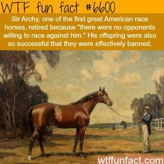 sir archy wtf fun facts - Horses Funny - Funny Horse Meme - - WTF Facts : funny interesting & weird facts The post sir archy wtf fun facts appeared first on Gag Dad. Wow Facts, Wtf Fun Facts, Funny Facts, Funny Memes, Random Facts, Crazy Facts, Strange Facts, Horse Meme, Horse Facts