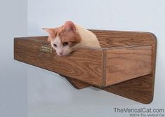 Wall Mounted Cat Bed - The Vertical Cat's Contemporary Cat Furniture, Trees, Shelves and Stairs | Kitty Superhighway