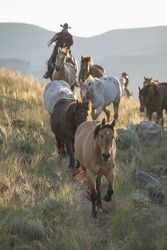 Cowboy rounding up the wild horses. Well, maybe wild, could be a raised herd of horses. Cow Girl, Horse Girl, Horse Love, Cowboy Horse, Cowboy Art, Western Riding, Western Art, All The Pretty Horses, Beautiful Horses