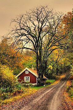 #Autumn Road