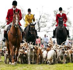 Berkeley Hunt with foxhounds at Frampton Country Fair on Sunday. Picture: Tamara Kwan