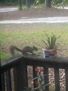Thquirrel!!