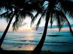 Ya oigo  las olas y las hojas que el viento mueve.