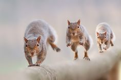 Three, on the Go byStefano Ronchi.  About Stefano:nature photographer, an activity that has allowed him to combine his two passions, photography and love for the animal world.  More information about Stefano: stefanoronchi  Thank You, Stefano, for your Permission to post your Photograph.  Source:500px.com