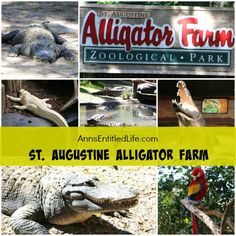 St. Augustine Alligator Farm; Hubby and I went to the St. Augustine Alligator Farm Zoological Park a few weeks ago. This is my review of the St. Augustine Alligator Farm Zoological Park, as well as photographs and tidbits of information about the zoo.  http://www.annsentitledlife.com/florida/st-augustine-alligator-farm/
