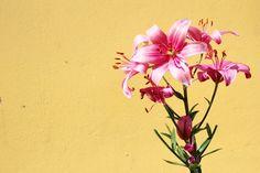 Flores de mamá,