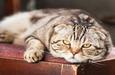 Did you know that there are two types of diabetes that cats can suffer from? Watch for these symptoms of feline diabetes and how to treat this disease.