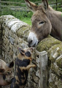 Love #donkey Visit our page here: http://what-do-animals-eat.com/donkeys/