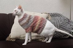 Wam and cozy multicolor sweather for cat Hand made knitted cat