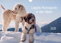 Lagotto Romagnolo in den Alpen 2020 (Wandkalender 2020 DIN quer) - Kalender Lagotto Romagnolo, Scenery, Dogs, Nature, Animals, German, Products, Grandma And Grandpa, Wall Calendars