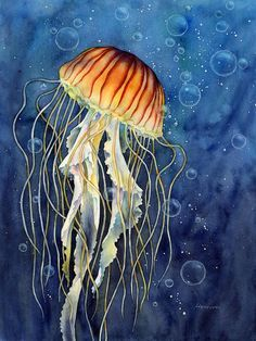 Jellyfish Acrylic Print by Hailey E Herrera. All acrylic prints are professionally printed, packaged, and shipped within 3 - 4 business days and delivered ready-to-hang on your wall. Choose from multiple sizes and mounting options. Jellyfish Drawing, Jellyfish Painting, Jellyfish Tattoo, Watercolor Jellyfish, Jellyfish Quotes, Jellyfish Aquarium, Jellyfish Sting, Jellyfish Light, Colorful Jellyfish
