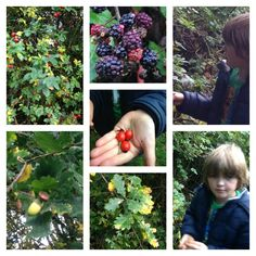 Foraging for wild berries.