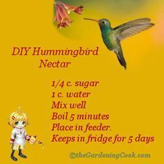 DIY Hummingbird nectar is easy to make:  http://thegardeningcook.com/diy-humming-bird-nectar/