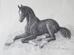 Людмила Томашевская - люди и кони. Жеребенок