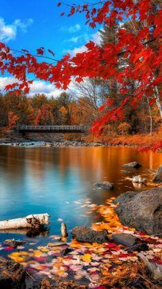 River, Leaves, Trees, Autumn | Automne | Télécharger le fond d'écran 1080x1920. Téléphones Mobiles, Apple iPhone 6 Plus :: WallpapersFund.com