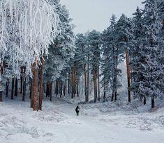 Postavi.neT. - Svet u slikama! - zima-priroda-slike zime-najelpse slike prorode-sneg