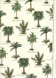Más tamaños | Palm Tree Varieties | Flickr: ¡Intercambio de fotos!