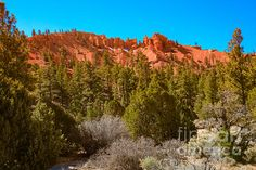Dixie National Forest: See more at:  http://fineartamerica.com/profiles/robert-bales.html