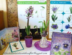 Zambila (2 ani si 7 luni) Spring Activities, Montessori, Glass Vase, School, Home Decor, Plant, Life, Decoration Home, Room Decor