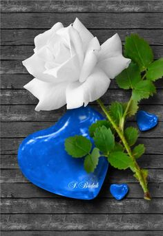Good afternoon my dearest angel. have your lunch jaana. and have a wonderful day at work my eternal love. always remember i love you no matter how we end up. always that will be true! I will message you at night ok jaana. Broken Screen Wallpaper, Heart Wallpaper, Flower Wallpaper, Hearts And Roses, Blue Roses, White Roses, Book Cover Background, Background Pictures, Love Symbol Tattoos