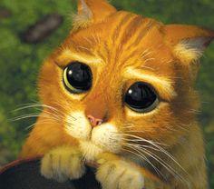 Ok, o gato de botas do Shrek é meio do mal, mas aí, ele lança esse olhar, e acaba com toda a maldade do mundo...