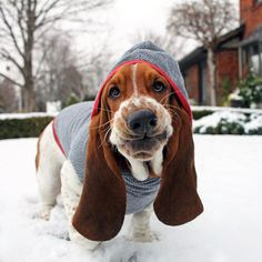 """The Long Dog Clothing Company on Instagram: """"Who says basset hounds can't be sassy?! Check out the one and only @deanthebasset, weathering the snow in our blue hoodie! We're not sure we've ever seen a sweater look so good on a basset body before ❤️ Check out the rest of our line at www.longdogclothing.com today! Photo credit: @deanthebasset (thanks!) #longdogstyle #longdogclothing #clothesthatfit #dogclothes"""""""