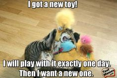 Looking for Funny Kitten Memes? Take a look at the funniest kitten memes ever. Our original and new kitten memes are suitable for all ages. Funny Animal Memes, Dog Memes, Funny Animal Pictures, Cute Funny Animals, Funny Cats, Funny Memes, Funniest Animals, Hilarious, Jokes